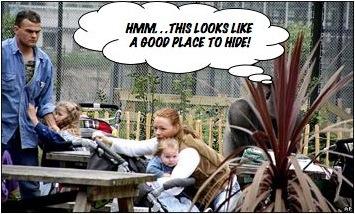 Escaped Gorilla at The Rotterdam Zoo